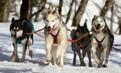 Best Destinations to go Dog Sledding