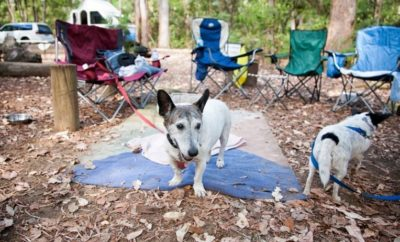 9 Tips for camping with your dog