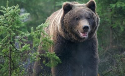What to do if you encounter a bear?
